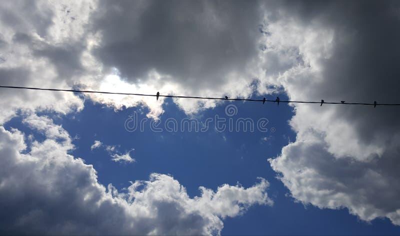 Soleil par les nuages orageux avec des oiseaux se reposant sur le fil photos stock