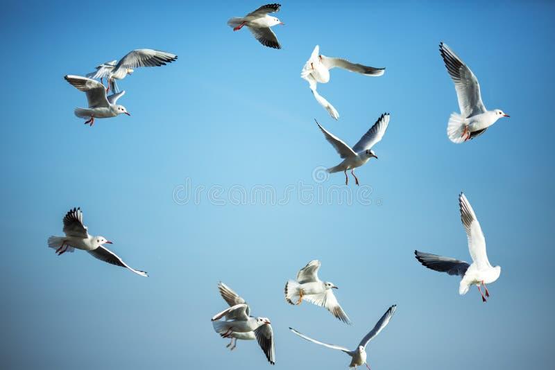Solen är glänsande och seagulls som flyger i en grupp i himlen royaltyfria foton