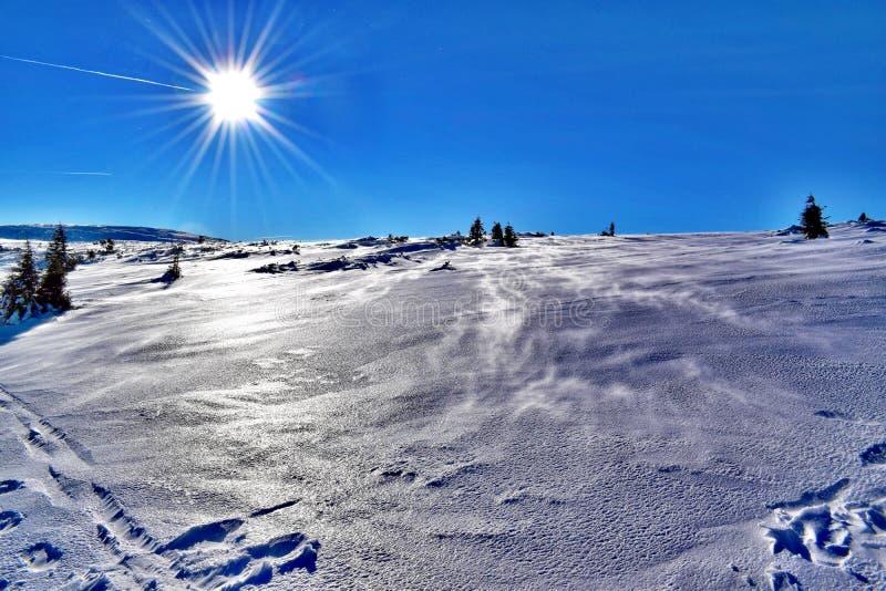 Solen över den djupfrysta slätten i de jätte- bergen royaltyfria foton