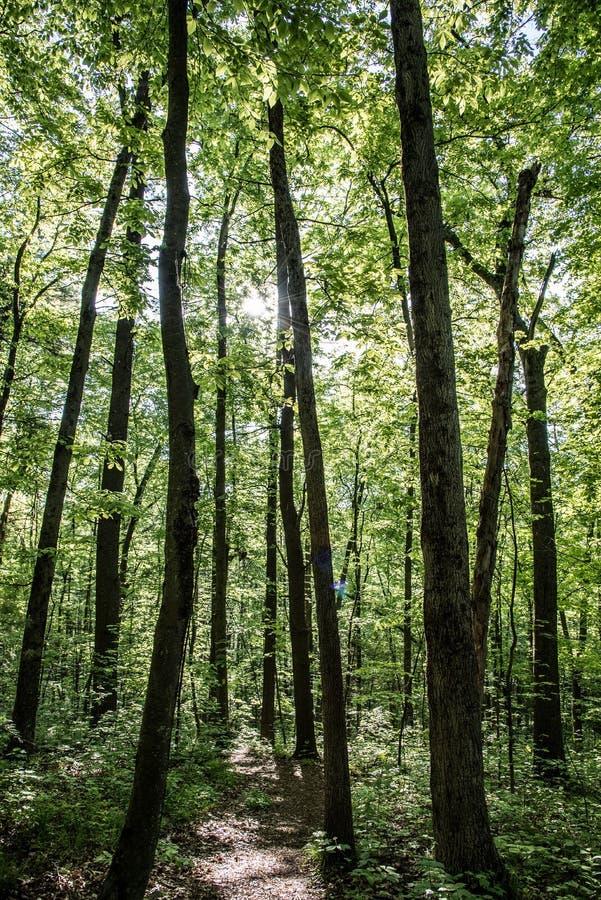 Solen applåderar ner på skoggolvet som förebådar en ny ny dag med inga fel i den arkivfoton