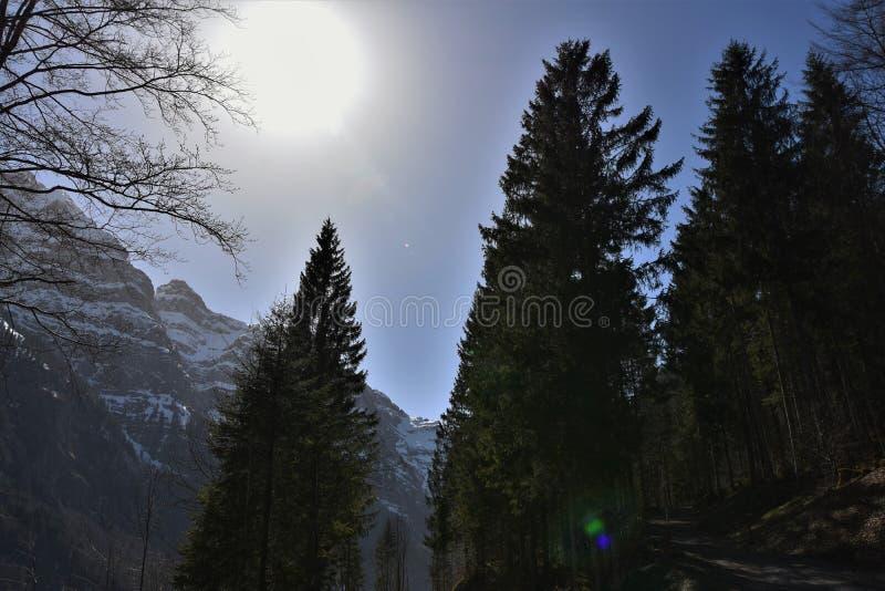 Solen bakom barrträd nära Klöntalersee-sjön royaltyfri fotografi