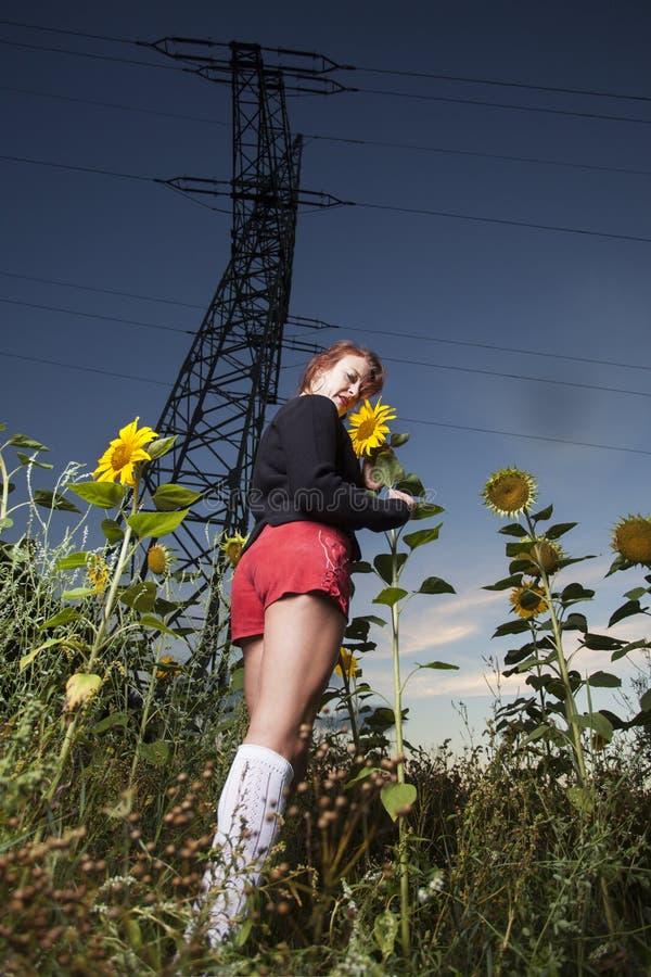 Solen blommar utomhus- arkivbild