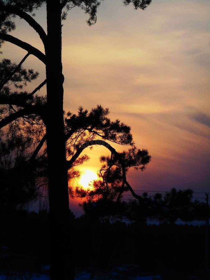 Solen döljer i filialerna på solnedgången fotografering för bildbyråer
