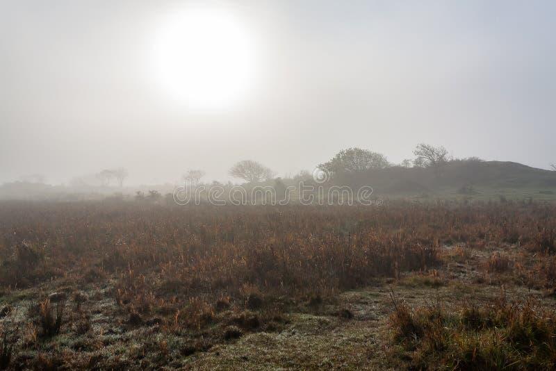 Solen försöker att skina till och med den täta dimman på ön Schiermonnikoog royaltyfri foto