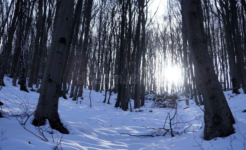 Solen fryser i vintern royaltyfria foton
