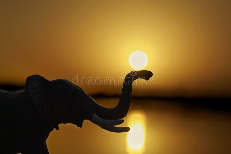Solen och elefanten under solnedgång royaltyfria bilder