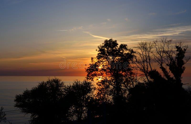 Solen på solnedgången över havet bak kronan av ett träd arkivbild