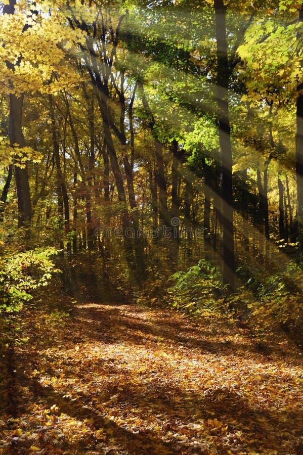 Solen Rays att skina in i skog royaltyfri bild