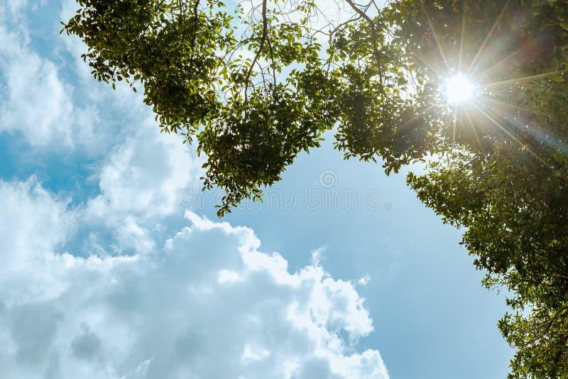 Solen Rays att skina till och med filialer av det gröna trädet och den blåa himlen royaltyfria foton