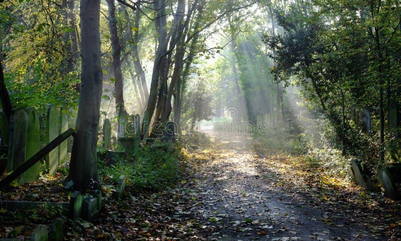 Solen rays in i bevuxen kyrkogård arkivbilder