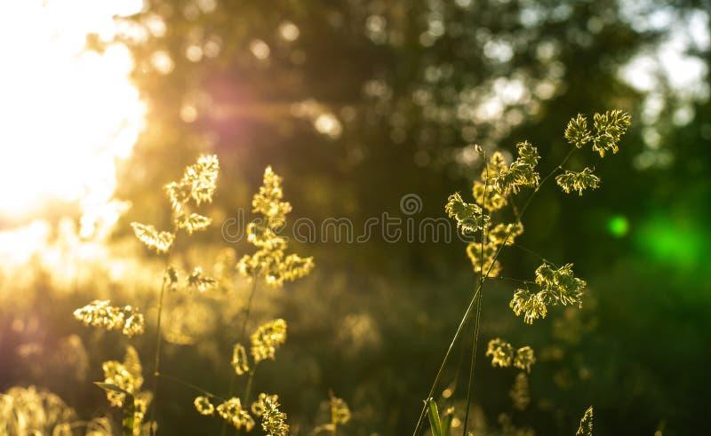 Solen rays i morgonen i skogen arkivbilder