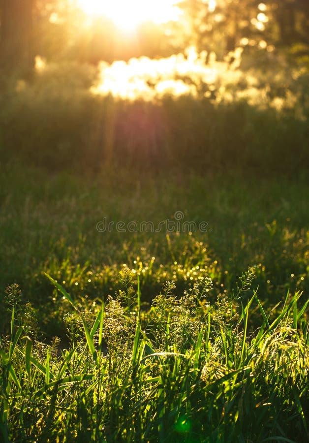Solen rays i morgonen i skogen royaltyfria foton