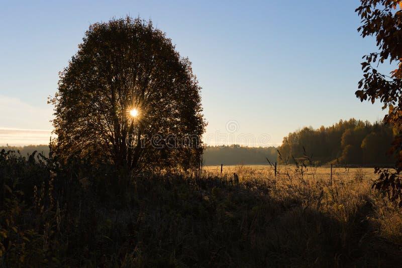 Solen skiner till och med filialerna av ett ensamt stående träd fotografering för bildbyråer
