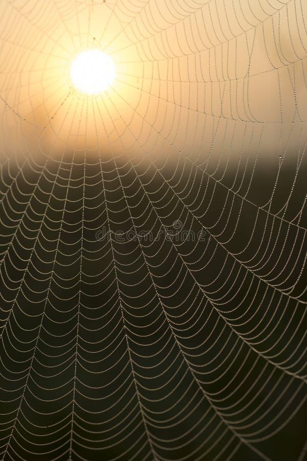 Solen som skiner till och med spindelrengöringsduken royaltyfri bild