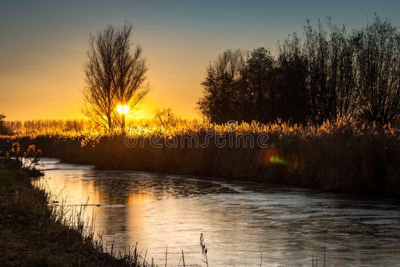 Solen ställer in bak ett träd över den holländska bygden nära gouda Det djupfrysta vattnet i kanalen reflekterar färgerna av himl royaltyfria foton