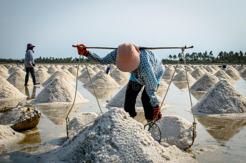 Soleni robotnicy rolni zdjęcia stock