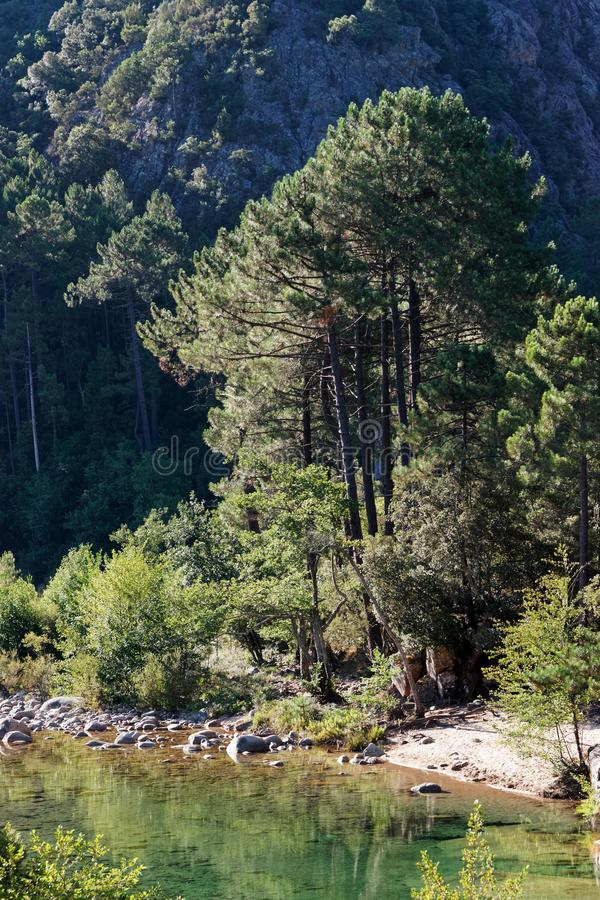 Solenzara河 库存图片