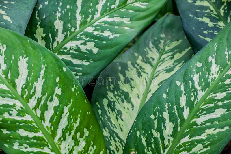 Solf background venation patterns of green leaf royalty free stock photography