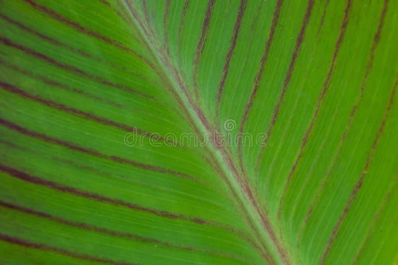 Solf background venation patterns of green leaf royalty free stock image