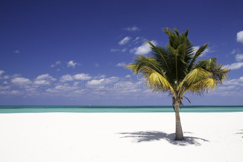 Solidão - praia branca da areia, palmeira fotos de stock
