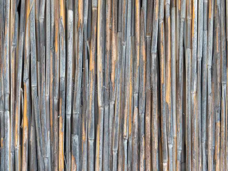 Solid wall of weather worn dry reeds. Fence royalty free stock photos