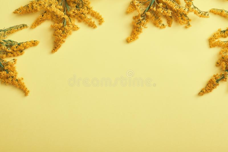 Solidago flower on yellow background. Minimal autumn concept - Solidago flower on yellow background. Autumn minimal design. Border floral background with copy stock photo