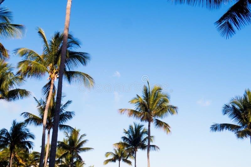 Solig dag över ett tropiskt paradis mycket av palmträd arkivfoton