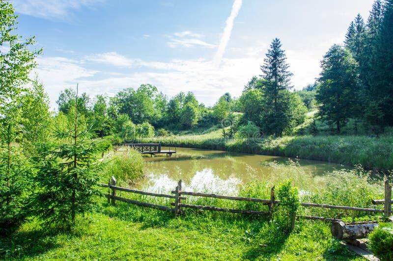 Solig dag f?r sommar, bl? himmel Skog sjö som omges av frodig vegetation av gräs och skogen arkivfoton
