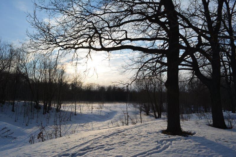 Solig dag f?r vinter Landskap med härliga ekar royaltyfria bilder
