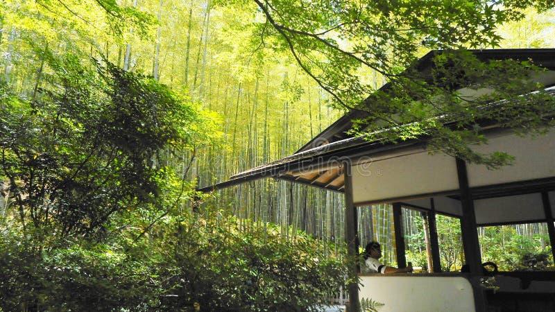 Solig dag i arashiyamabambudunge, kyoto, Japan fotografering för bildbyråer
