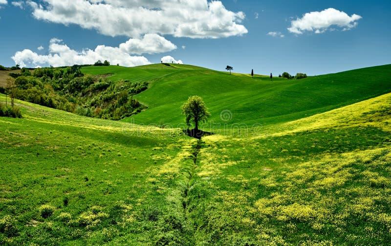 Solig dag i Tuscany gröna kullar Landscape besk?dar Tuscany Italien, Europa royaltyfria bilder