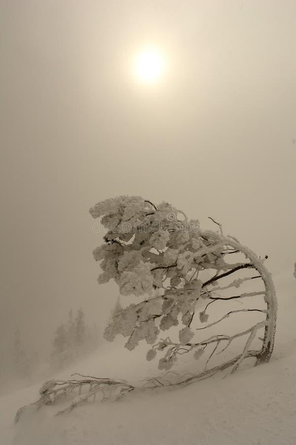 Solig dag i vinterbergen arkivfoto