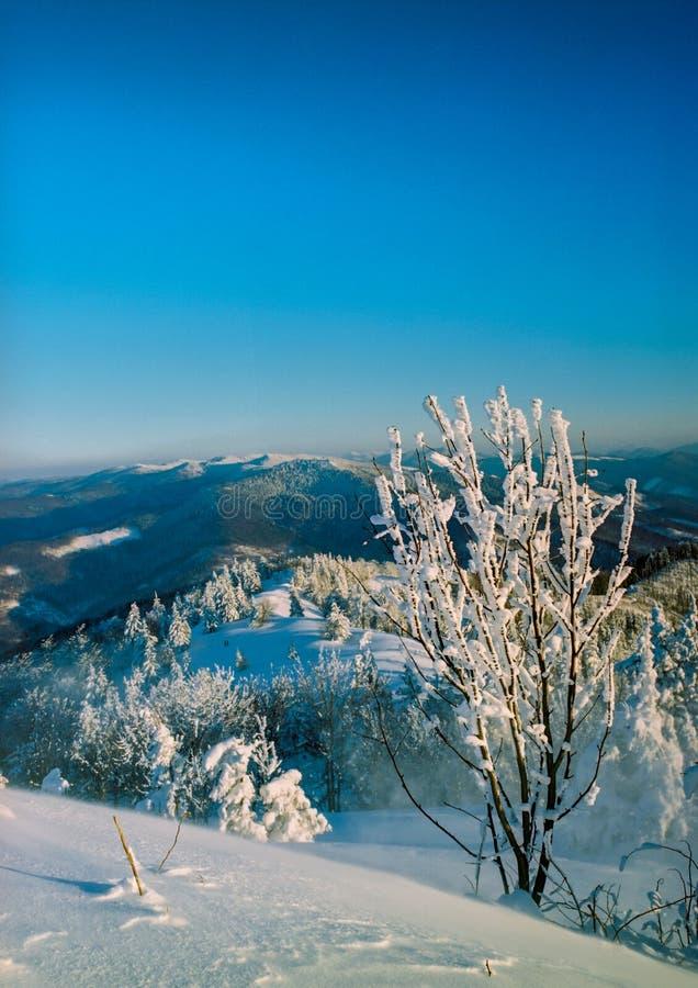 Solig dag i vinterbergen royaltyfri foto