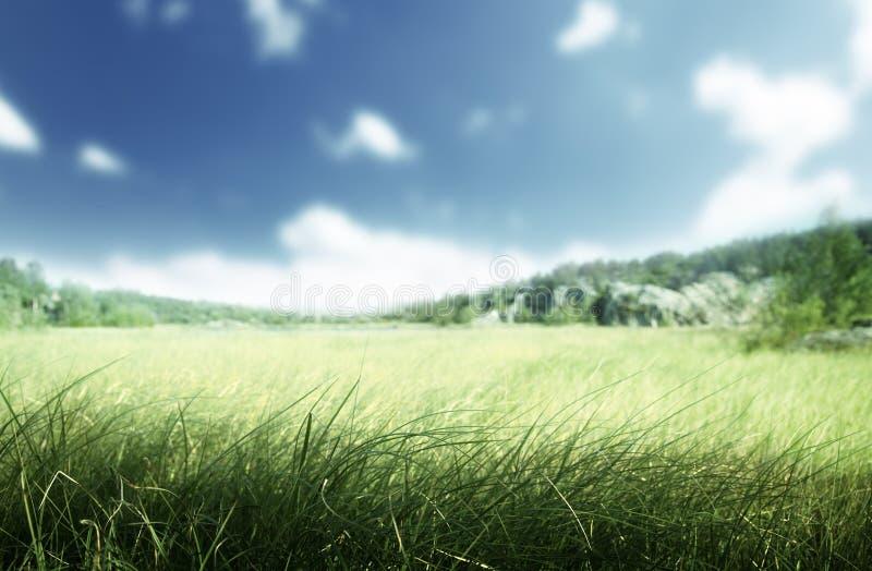 Solig morgon och fält av gräs arkivbild