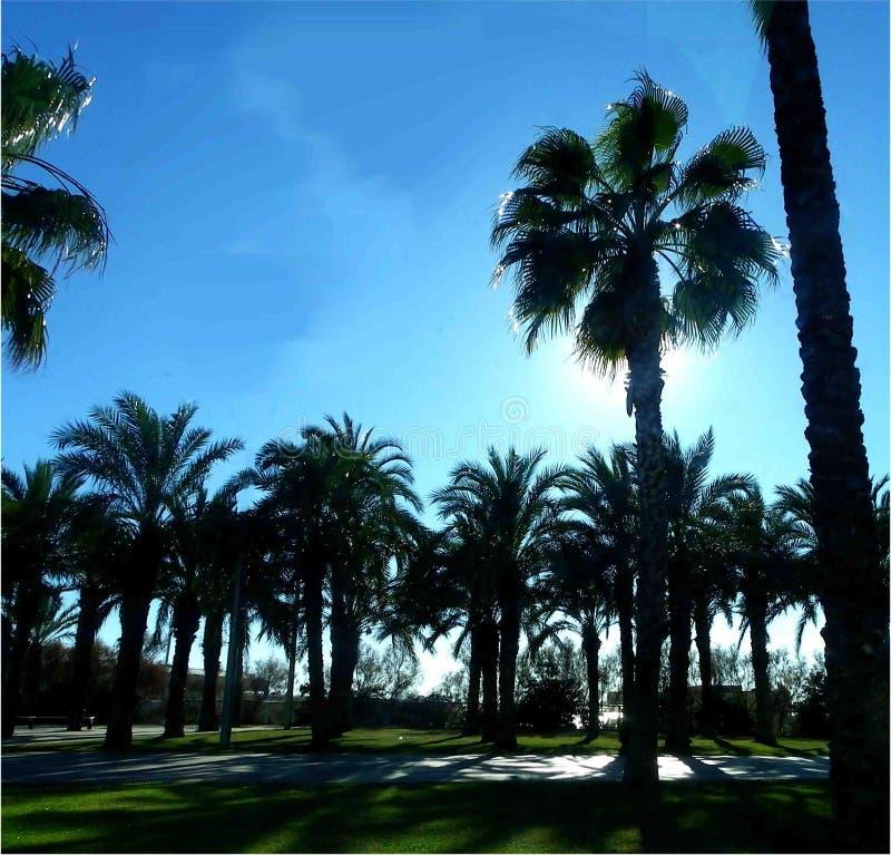 Solig morgon på promenaden arkivbilder