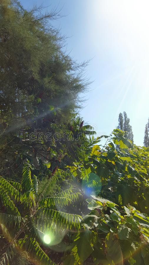 Solig natur fotografering för bildbyråer