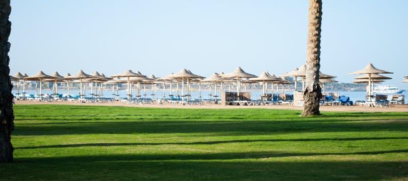 Solig strand i Egypten med paraplyer och grönt gräs Mörka skuggor på grönt gräs nära av sandstranden fotografering för bildbyråer