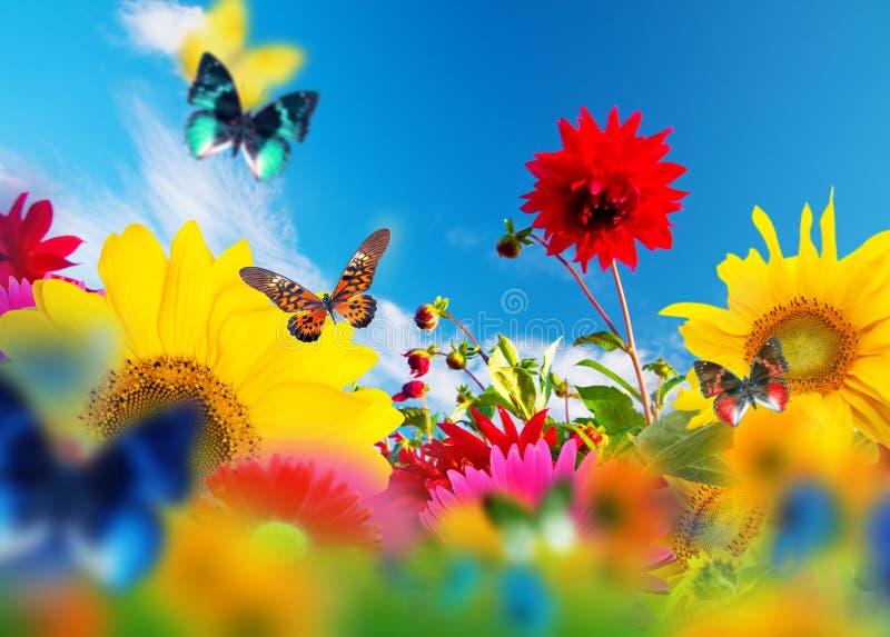Solig trädgård av blommor och fjärilar royaltyfri foto