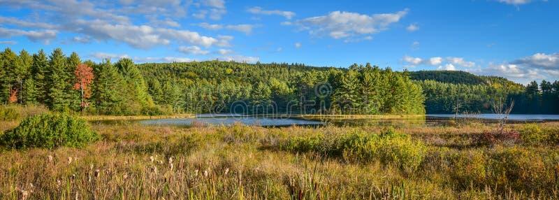 Solig vägrensikt av träsk- och skogsmarkvildmarklandet Varm sommardag i boreal skogvildmark i Ontario Kanada arkivfoto