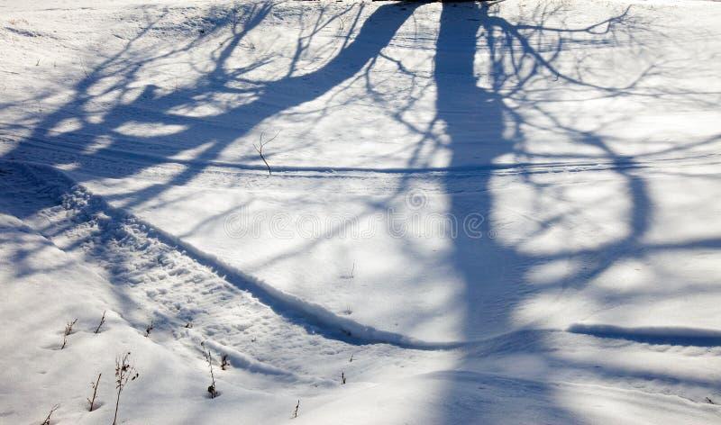 solig vinter för liggande royaltyfri bild