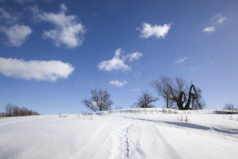 solig vinter för liggande royaltyfria bilder