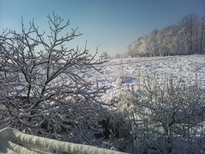 solig vinter för morgon royaltyfri fotografi