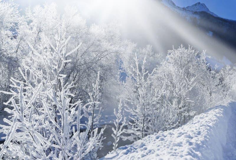 Solig vintermorgon royaltyfria foton