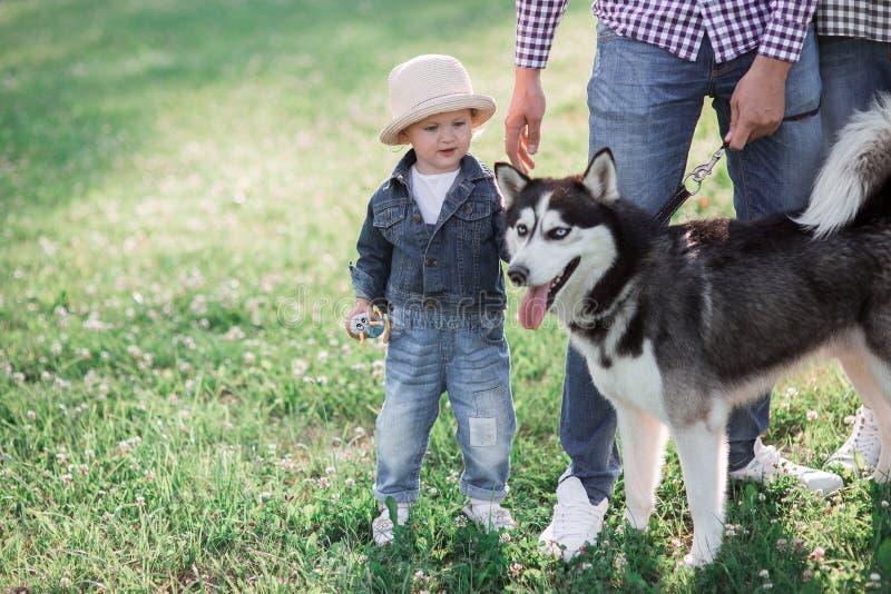 Soliga bilder av en lycklig liten flicka med en hund royaltyfri foto