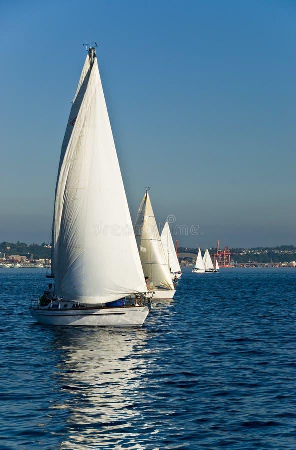 soliga dagsegelbåtar royaltyfria foton