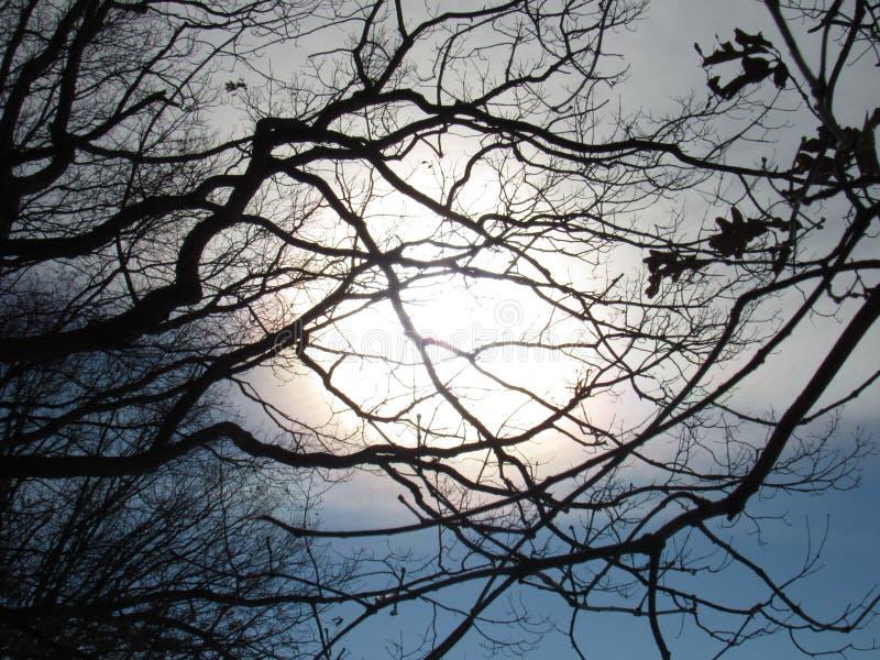 soliga trees arkivbild