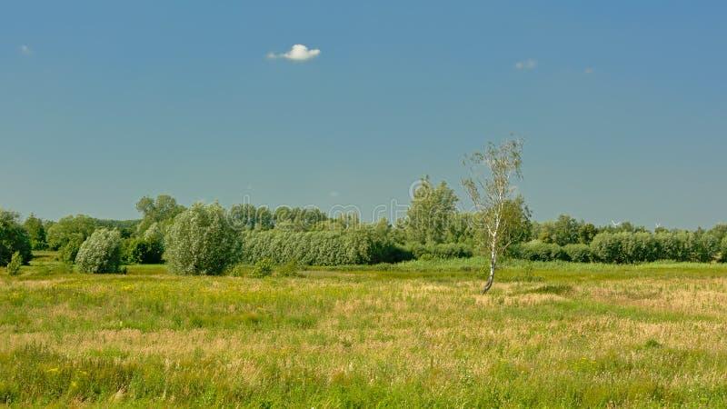 Soligt flemish sommarmarsklanlandskap i den flodScheldt breda flodmynningen i Flanders royaltyfri foto