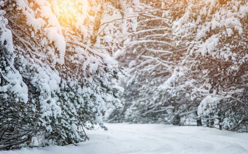 Soligt frostigt snöig vinterlandskap royaltyfri foto