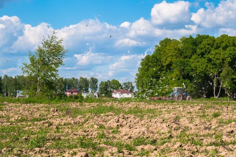 Soligt landskap av bygden i början av sommar En traktor plogar fältet arkivfoto