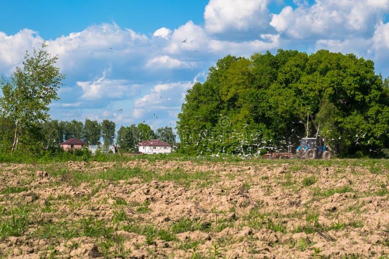 Soligt landskap av bygden i början av sommar En traktor plogar fältet fotografering för bildbyråer
